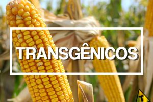 A Polêmica dos Alimentos Transgênicos